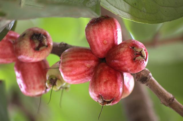 guava-231616_640