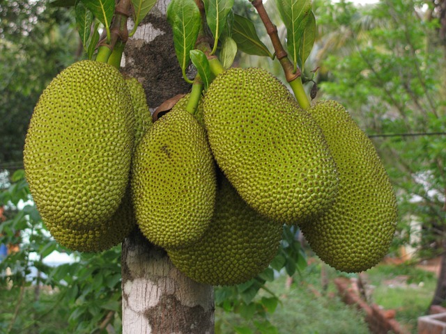 jackfruit-452532_640