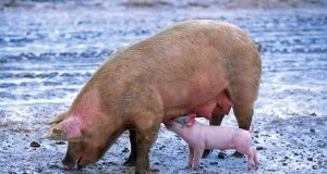 mesna industrija boji